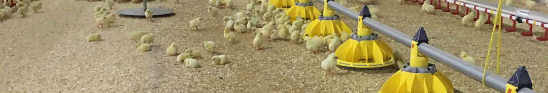 Chick Paper - Kandco Envosave Ltd